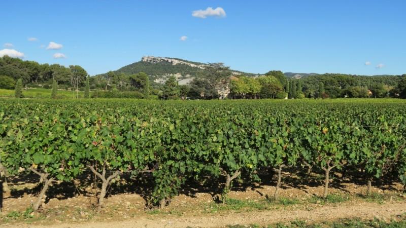 Vinyards Cassis, France