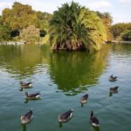 Ducks at the Lake Parc de la Ciutadella Barcelona