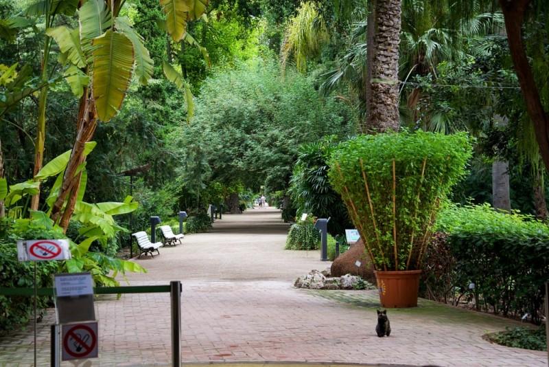 Jardin bot nico barri el carme valencia spain - Jardin botanico valencia ...