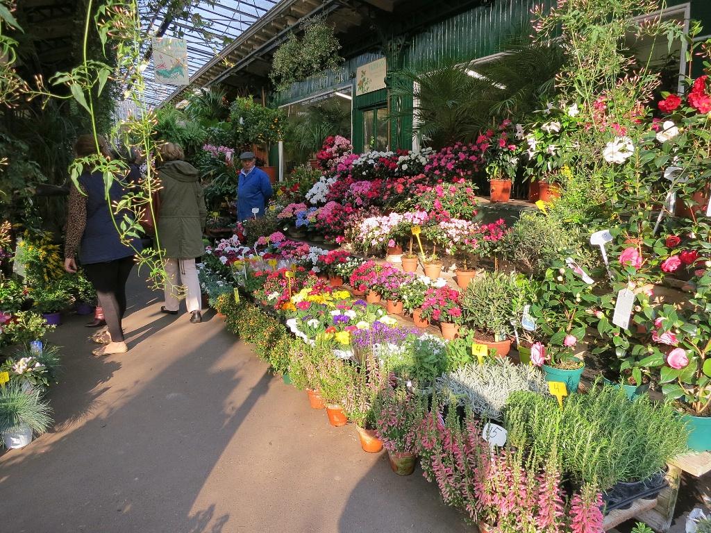 Colorful Flowers Marche Aux Fleurs Ile De La Cite Paris France