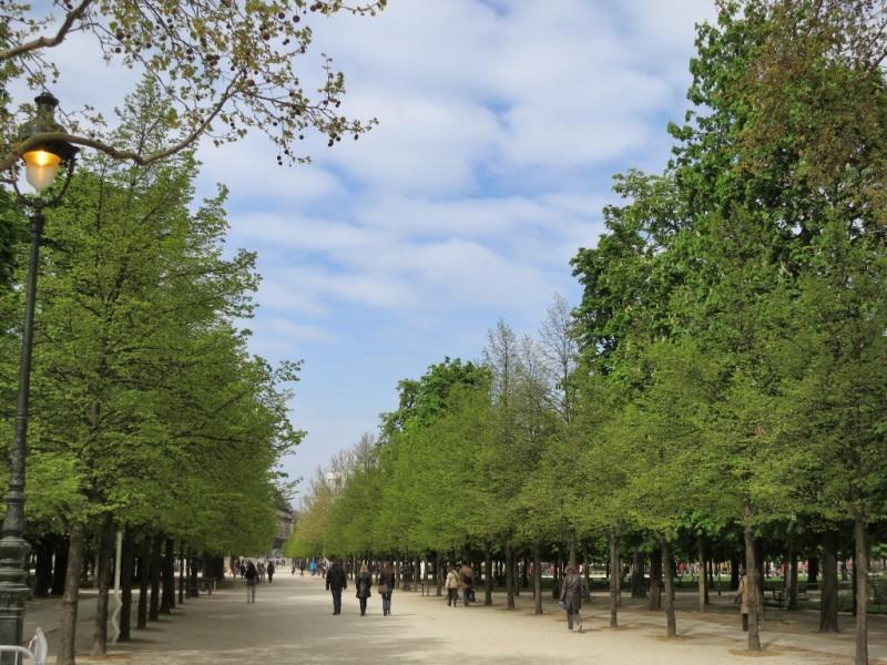 tree lined pathway tuileries gardens paris france - Tuileries Garden