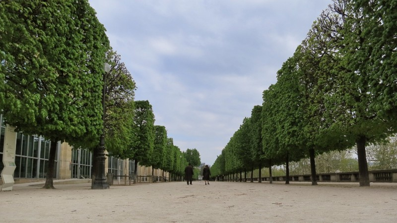 Treed lane tuileries gardens paris france - Sculpture jardin des tuileries ...
