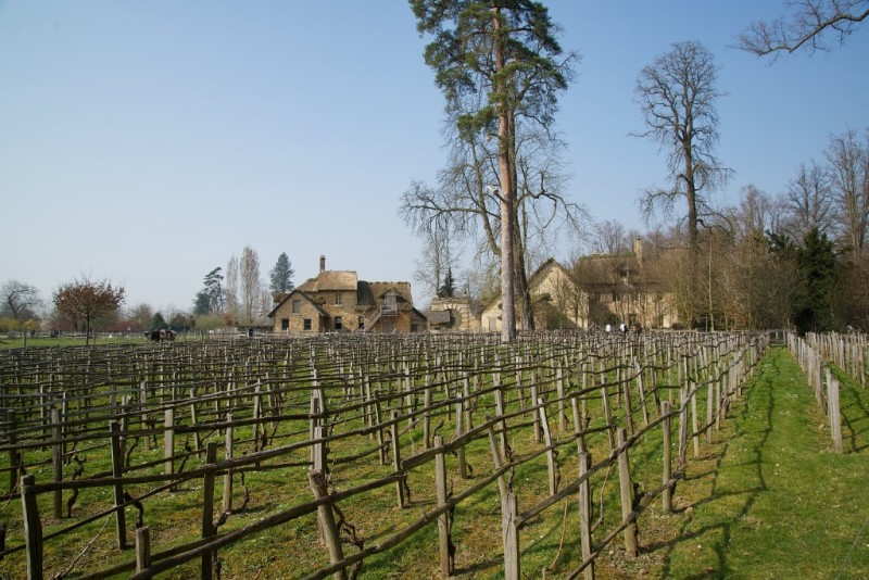 Hamlet Houses and Vineyard Domaine de Marie Antoinette Versailles Estate France