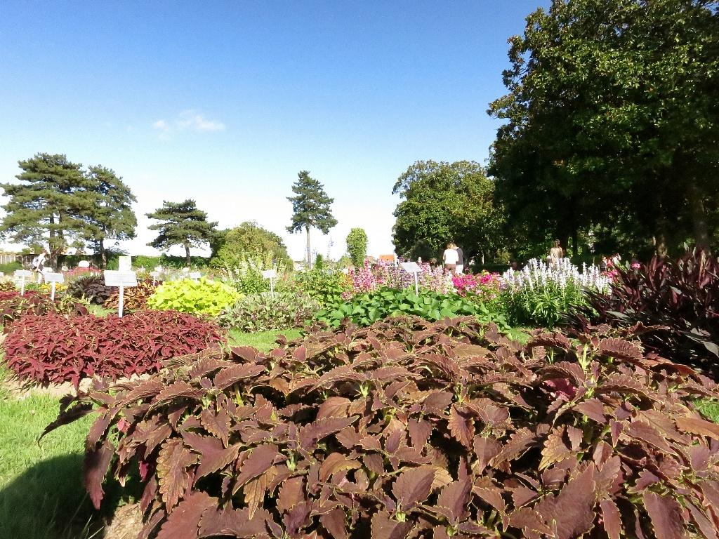 Garden plants jardin des plantes nantes france for Jardin des plantes nantes