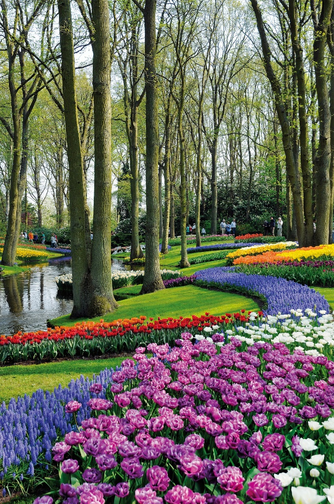 ... Rows Of Flowers Keukenhof Holland ...