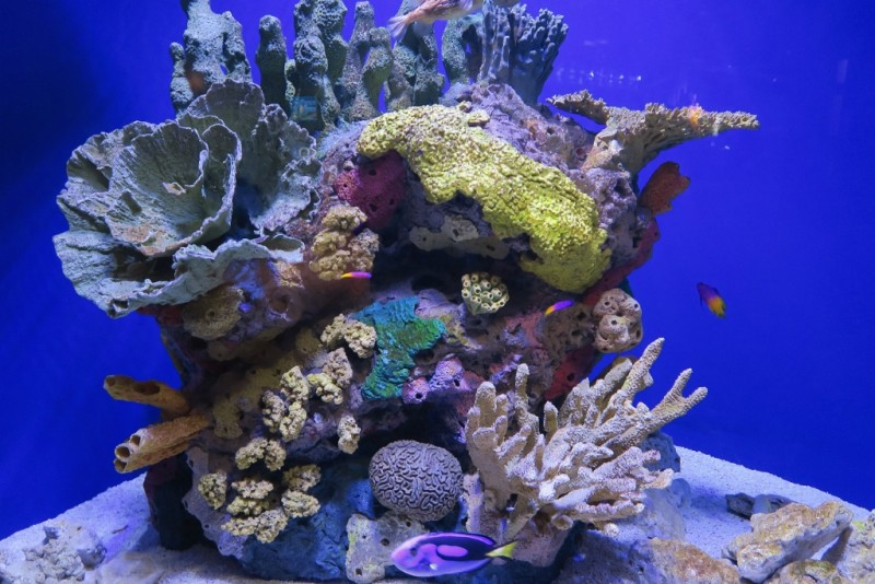 Things To Do In New Orleans The Aquarium Of The Americas