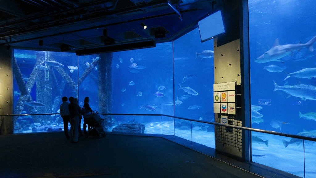 Gulf Of Mexico Exhibit Aquarium Of The Americas New