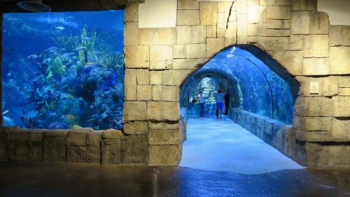 Things to do in new orleans the aquarium of the americas for Things to see new orleans