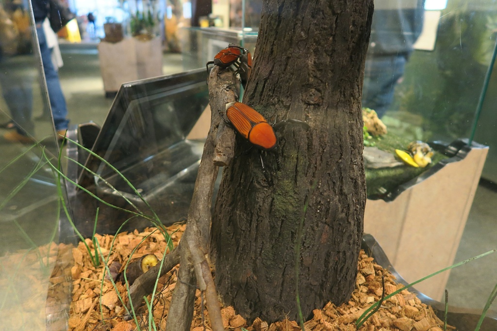 Red Beetle Audubon Butterfly Garden And Insectarium New