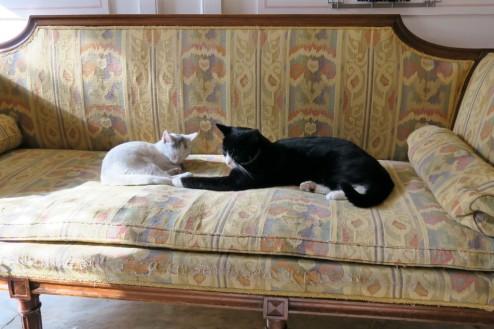 Resident Cats Kattenkabinet Amsterdam