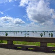 View of Atchafalaya Basin from Interstate 10 Louisiana