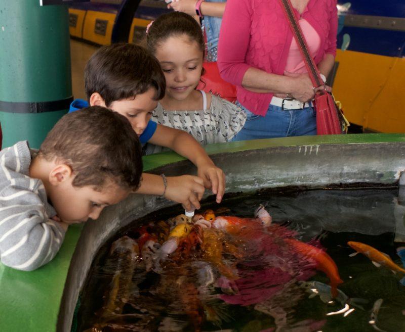 Feeding the Koi Barcelona Aquarium