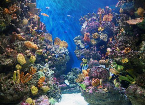 Reef Aquarium Barcelona