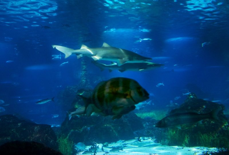 Shark Barcelona Aquarium
