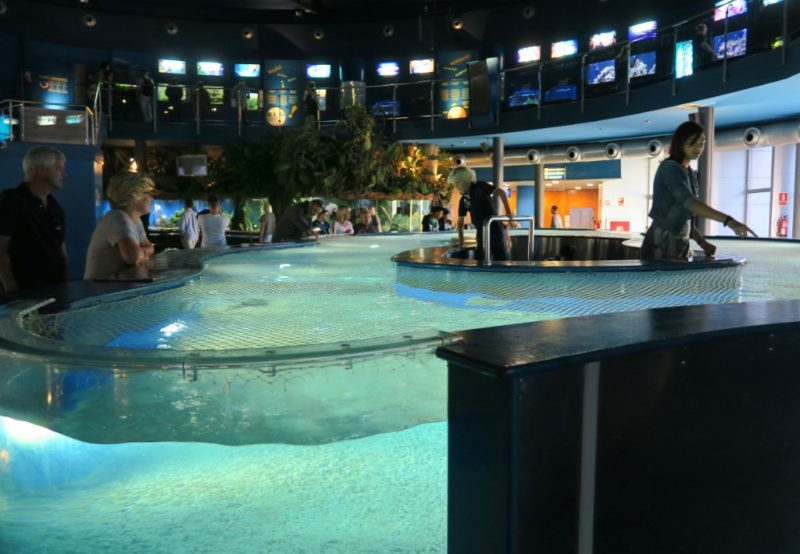 Stingray Tank Barcelona Aquarium
