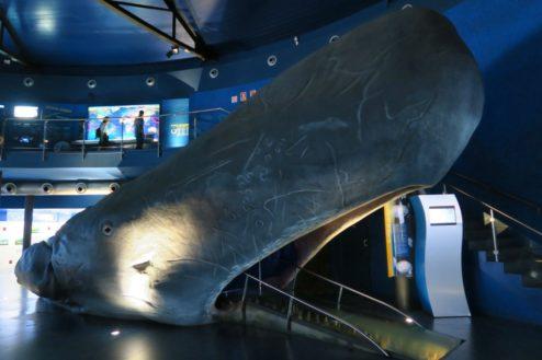 Whale Barcelona Aquarium