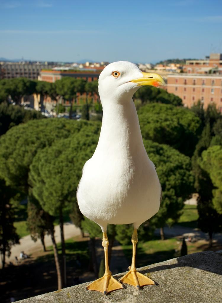 Birds Eye View Castel Sant Angelo Rome Italy